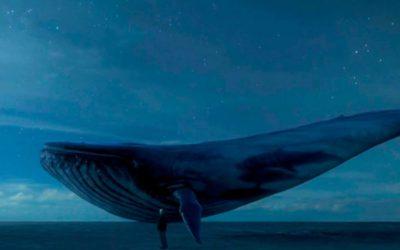 Blue whale: ci sono casi in Emilia-Romagna?