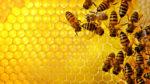 Novità per l'apicoltura