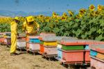 Apicoltura: bando da 480 mila euro