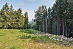 Sostegno al ripristino delle foreste danneggiate