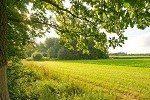 48 milioni di euro per i 10 bandi di agricoltura sostenibile