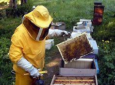 Apicoltura. Dalla Regione 490mila euro per il miglioramento della qualità del miele, salute delle api e sicurezza per i consumatori