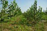 Bandi per promuovere un'economia del bosco sostenibile